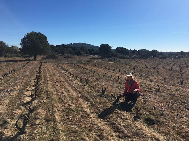 Avila - Wine Tours Madrid - Garnacha