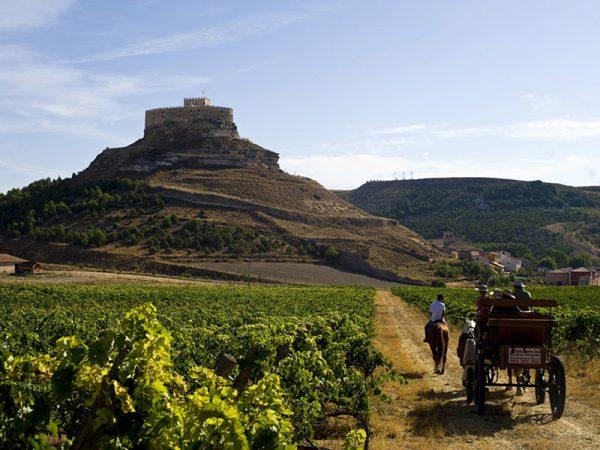 Real Tasting Experiences Ribera del Duero
