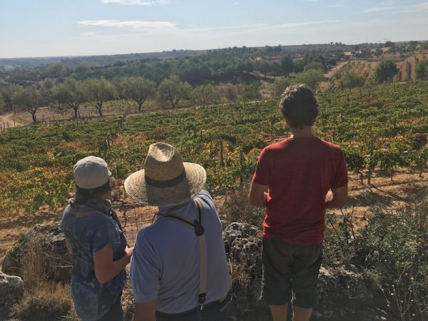 Bespoke Wine Tour Madrid