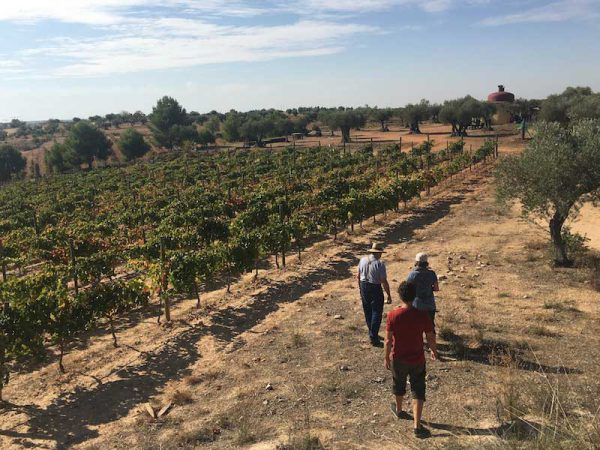 Vineyard walk at Bodega Qubél in Madrid wine region