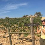 Half day wine tour Madrid