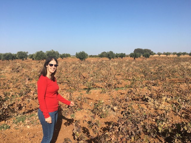 Esther, the oenologist, showing us their Tempranillo vines