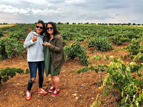 vineyard fun colorful wines